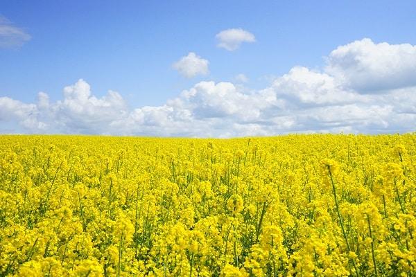 soigner les allergies au pollen
